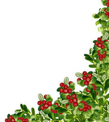 cowberry isolated on white background