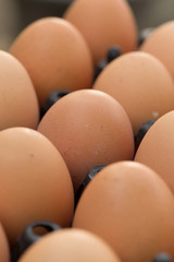fresh organic eggs from chicken farm agriculture for sale