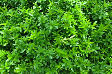 Green small plant in the resort