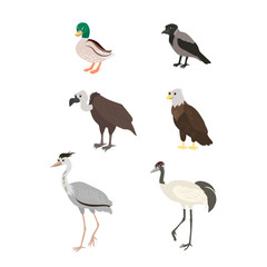 Cartoon set duck crow buzzard eagle crane heron