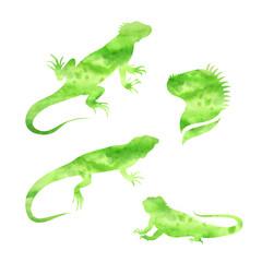 Vector lizard iguana watercolor set vector