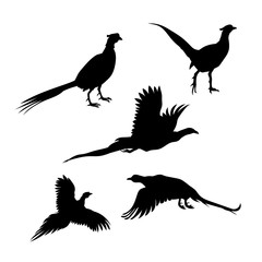Bird pheasant vector silhouettes.