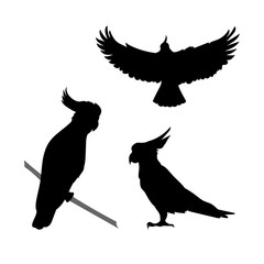 Cockatoo bird vector silhouettes.