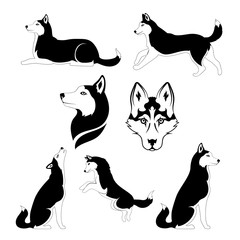 Graphic silhouette of a dog of breed siberian husky.