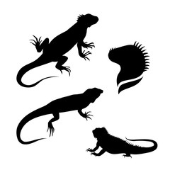 Lizard iguana set vector