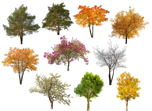 collection of ten isolated trees
