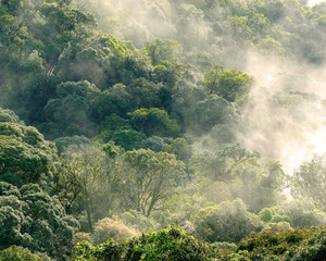 Aerial view of rainforest with mist and sunlight  in the morning
