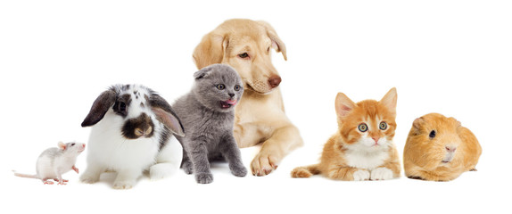 kitten and puppy and rodents