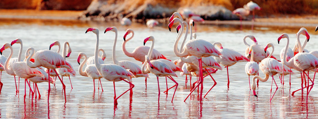 Fototapeten Flamingo Flamingos near Bogoria Lake, Kenya