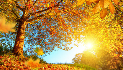 Fototapete - Golden autumn scenery with lots of sunshine