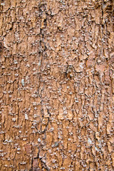 bark texture or background
