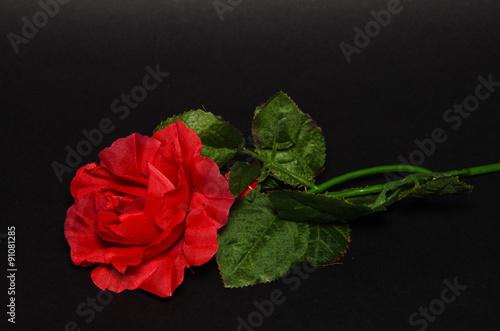 Macro Di Una Rosa Rossa Isolata Su Sfondo Nero Stock Photo And
