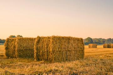 Straw bales on a field