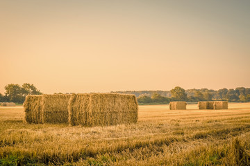 Harvested straw bales on a countryside