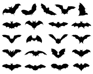 Black silhouettes of different bats, vector