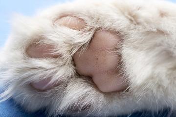 Cat paw close-up.