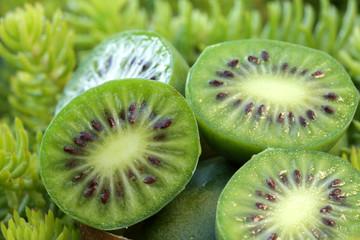 kiwibeeren_scharfzähnige strahlengriffelfrüchte