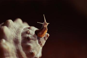 Outside the box snail seashell creative concept