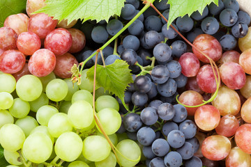 Bunch of colorful grapes