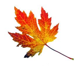 Herbstschönheit: buntes Blatt :)