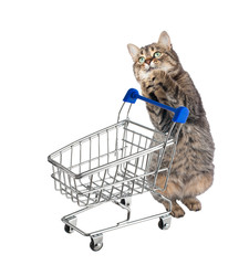Cat with shopping cart. isolated