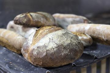 bread in bakery