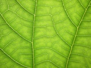 macro pattern of green growing leaf surface