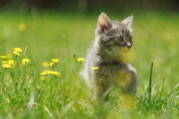 Kitten in Blumenwiese