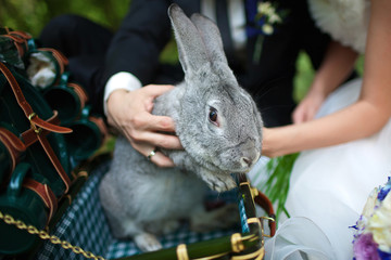 Newlyweds kept a rabbit