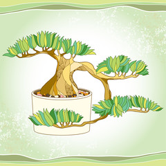 Bonsai tree in the round pot on the textured background. Traditional Japanese symbol