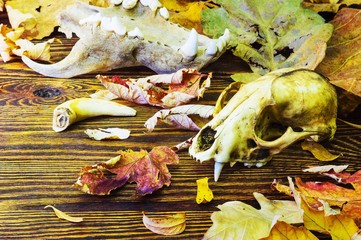 The skull of an animal in a pile of rotting leaves