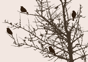 sparrows on a pine tree