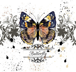 Vector illustration with detailed butterfly in vintage style
