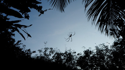 Silhouette picture of spider is on cobweb against with blue sky and silhouette tree around. Concept of scary and dark