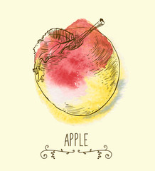fresh useful eco-friendly apple