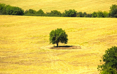 The lonely tree, Hotnitsa village, Bulgaria.