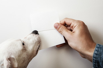 Man and dog holding two wite business cards on white wall backgr