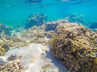 rocks and seaweeds on the sea floor