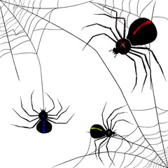 Composition of three realistic Spiders in different position, with a spider web