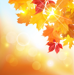 Sunny autumnal background with leaves. Vector illustration.