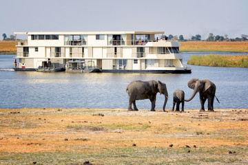 Elephants and tourists on the banks of Chobe river