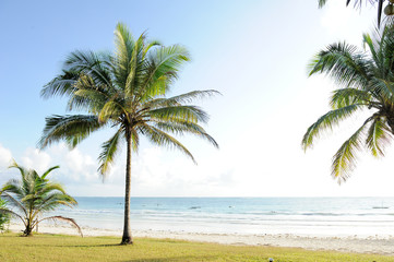 Palms and  beach