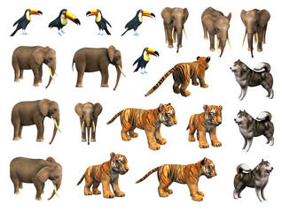 Zoo animals collection. Elephant,  tiger cub, toucan, Eskimo dog