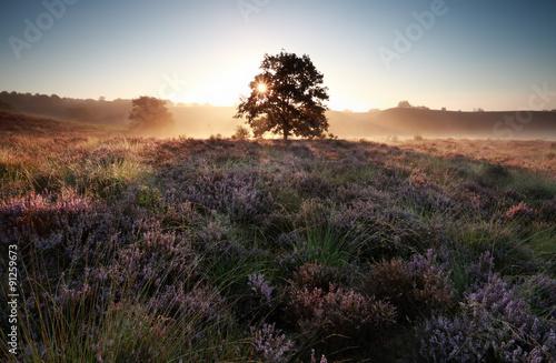 поле цветы рассвет field flowers dawn  № 3837111 загрузить