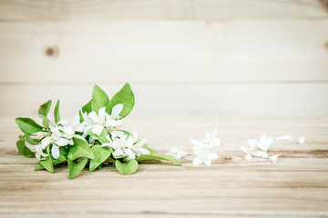 Beautiful white flowers on a wooden background
