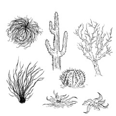 Vector Set of Sketch Cactuses and Desert Plants