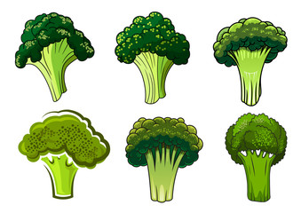 Isolated green ripe broccoli vegetables