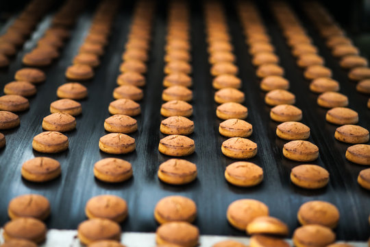 Honey-cake  on the production line at the bakery