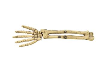 One bone arm on white background