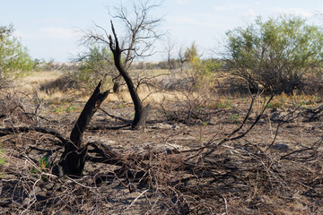 burned bushes and trees
